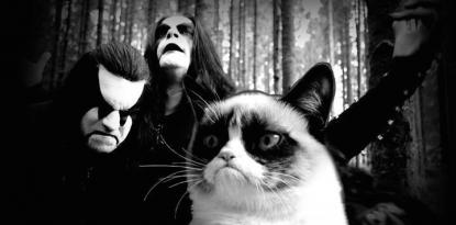 Grumpy Cat Musik